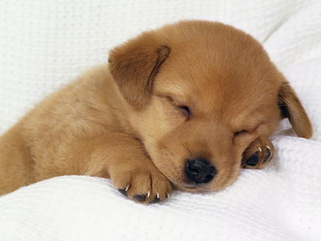 http://4.bp.blogspot.com/_WhhVQhsJ0ZI/S7F1RUF7XQI/AAAAAAAAF4I/7qozgwHI_xU/s1600/cute-dog.jpg