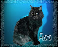 We Miss You Floyd