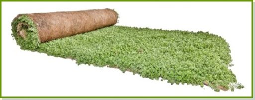 Cubiertas vegetales en tepe de sedum el nou garden - Cubiertas vegetales para tejados ...