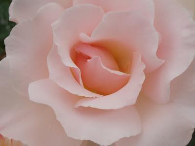 Concurso rosas parque del oeste