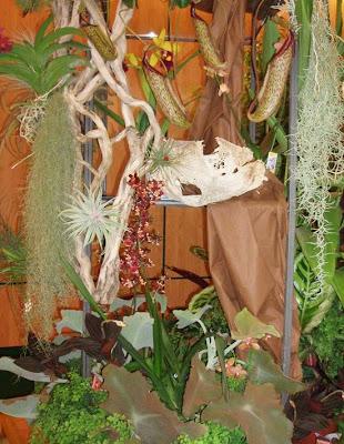Orquideas 2009