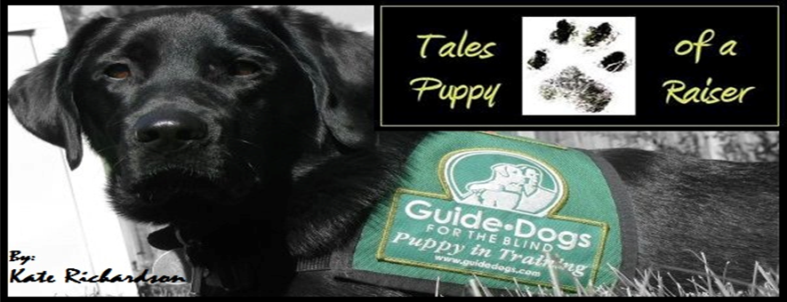 Tales of a Puppy Raiser