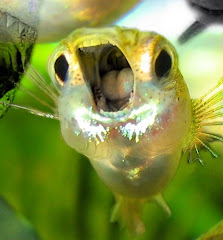 The Screaming Guppy