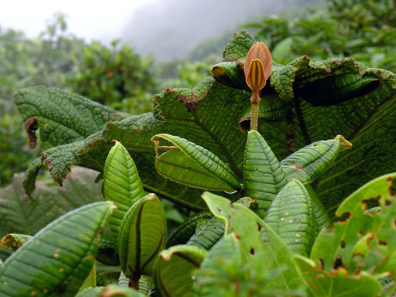 Interesting Rainforest Plants