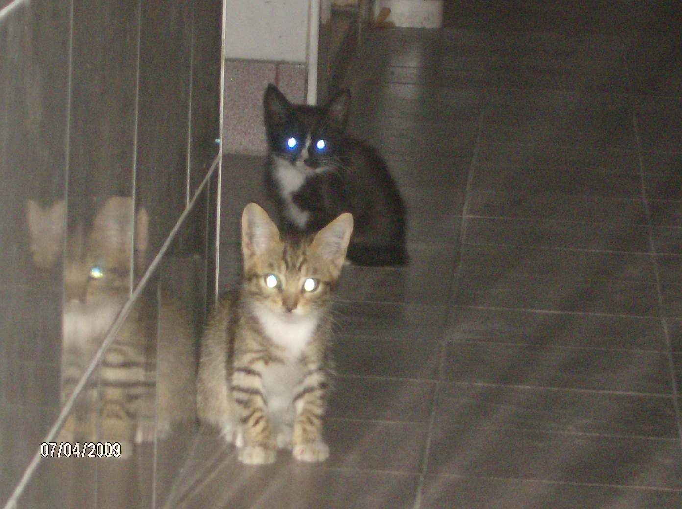 [gatitos+en+adopcion+san+justo+abril+2009]
