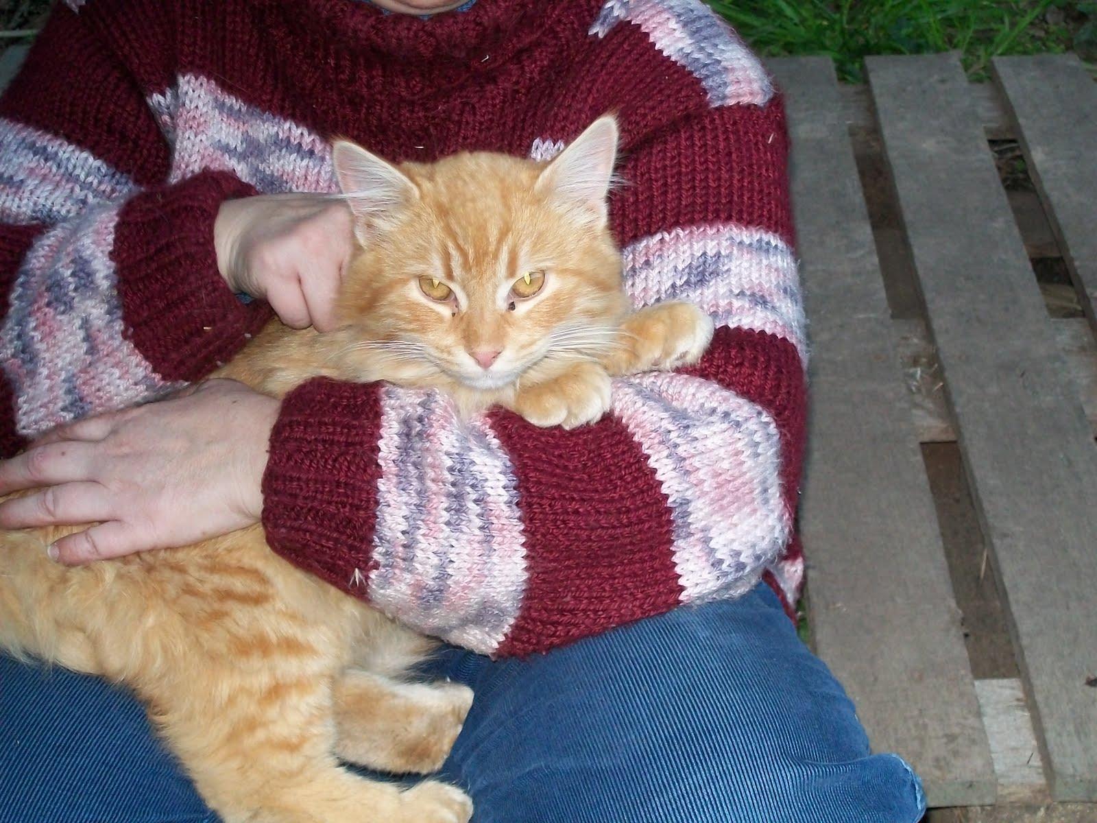 Adoptándonos: Dos hermosos gatitos rubios (macho y hembra) están en
