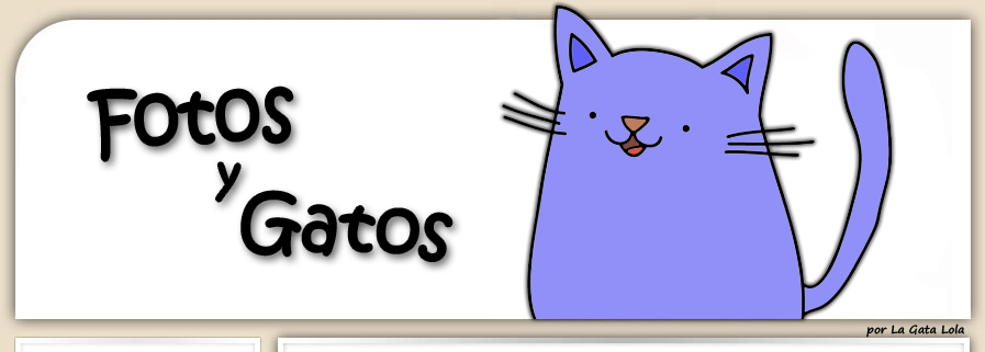 Fotos y Gatos