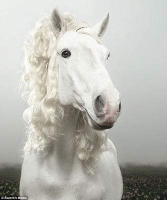 Animals Wearing Wigs Kinda vera wang bridle.