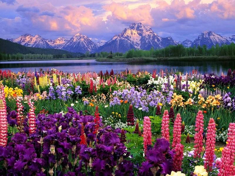external image field-of-flowers.jpg
