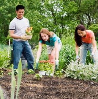 plantas y flores plantas especies consejos jardineria
