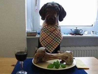 Alimentos perros