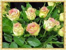 Rosas de Valter de Brasil