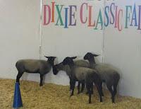 Dixie Classic Fair Lambs