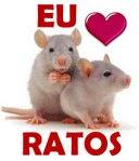Comunidade Amor Verdadeiro Aos Ratos