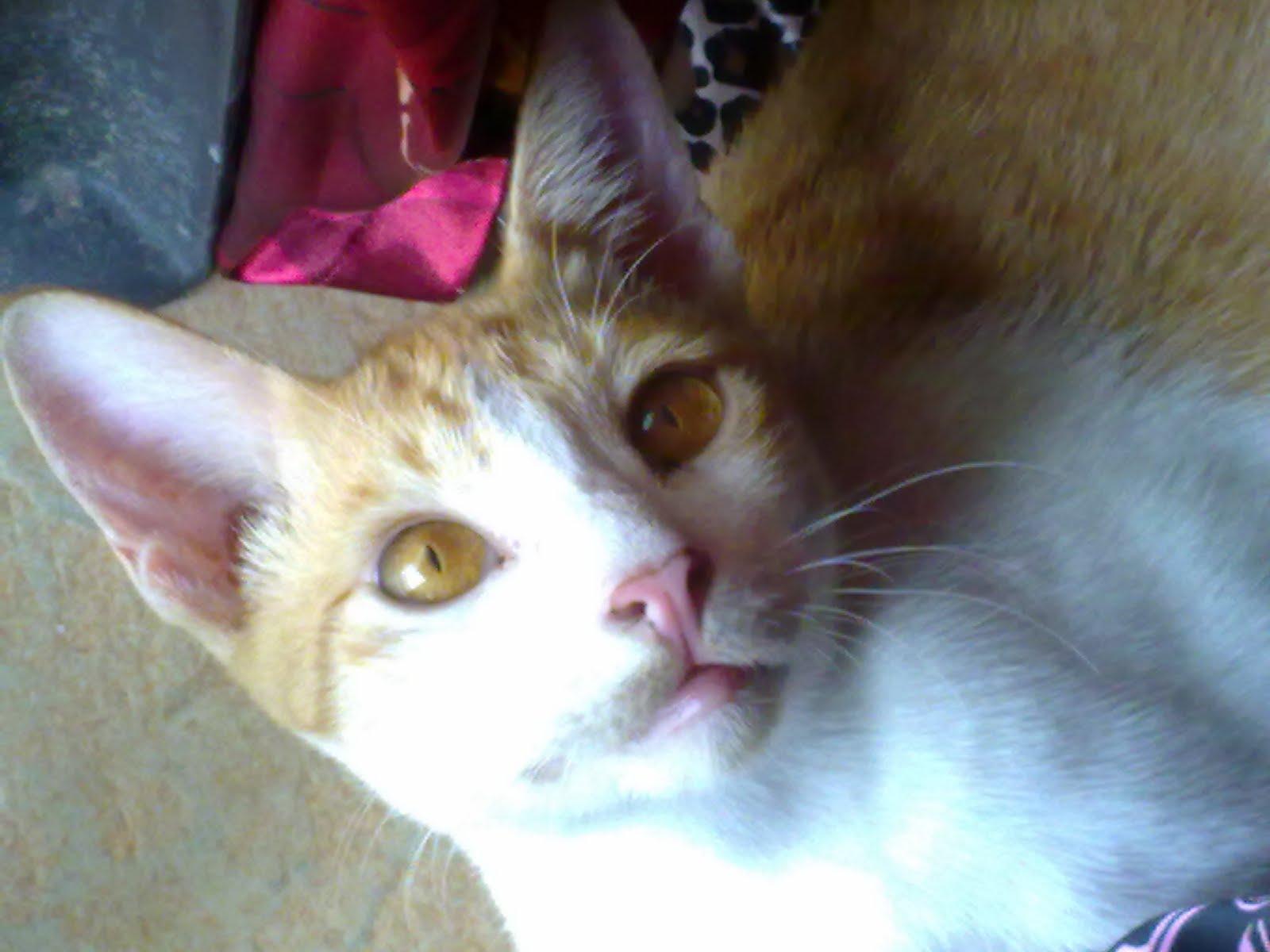 Sah Terkena Badi Si Kucing Berbulu Kuning Kak Dell