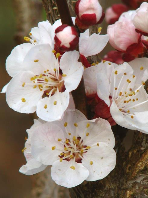 [blossom_pink.jpg]