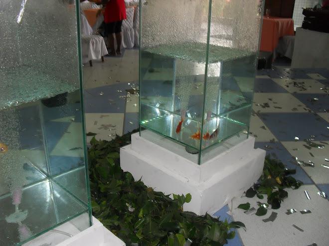 Peixinhos na Agua