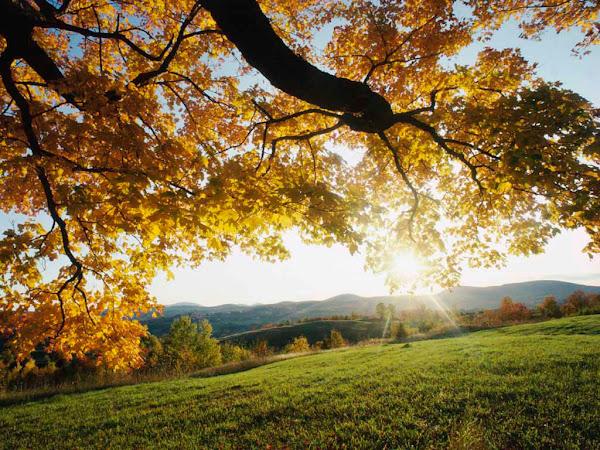 A felicidade como o Sol, transmite alegria a todos os lugares!!!