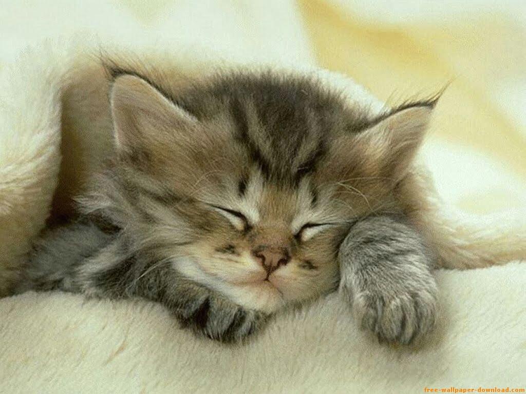 gato tierno: