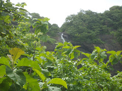 "Dense forest vegetation on ""Sagargad hill"""