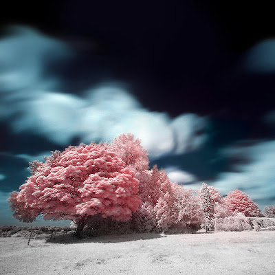 The Most Beautiful Trees Ever