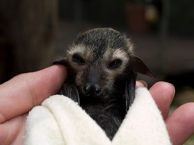 Blankets And Baby Bats Seen On www.coolpicturegallery.us
