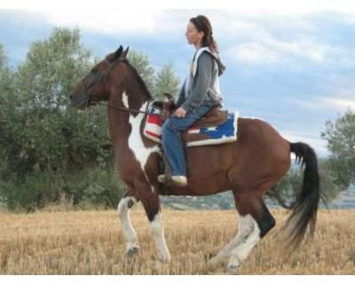 cavalli in vendita horse country life annunci pagina 10