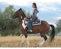 Cavallo argentino horse country life annunci for Quanto costa mantenere un cavallo