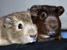 Wiggy & Jaffa