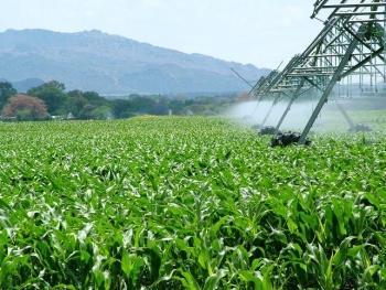 Resultado de imagen de agricultura de regadío