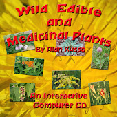Wild Edible and Medicinal Plant Interactive Computer CD by Alan Russo