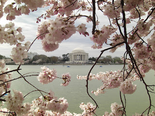 The Jefferson Monument during the Cherry Blossom Festival