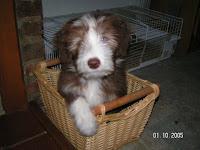 Dobby als puppy