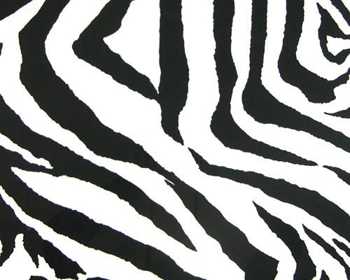 zebra myspace background