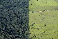Desmatamento na região de Alta Floresta (MT), município que faz parte da Amazônia; prática teve crescimento de 157% em um ano