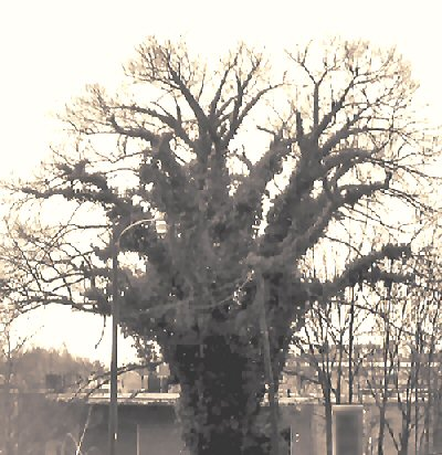 Lynching Tree Today