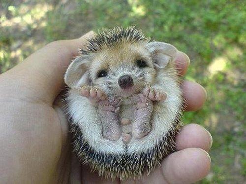 The World's Cutest Hedgehog | Animals eating Animals