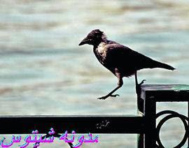 يبقى انت اكيد فى مصر 2 %D9%8A%D8%A7%D8%B1%D8%A7%D9%8A%D9%82