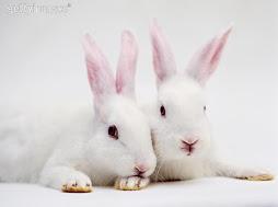เจ้ากระต่ายตัวน้อย