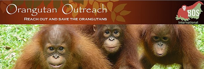 Orangutan Outreach - tut etwas für den Regenwald und die Orangs! click: