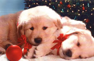 Christmas Puppy Backgrounds