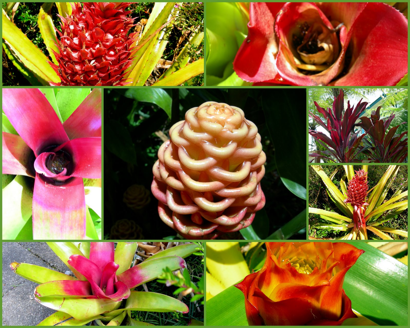 Plants In The Tropical Rainforest Collage Tropical Far North Que...