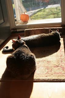 Sun soaked kitties