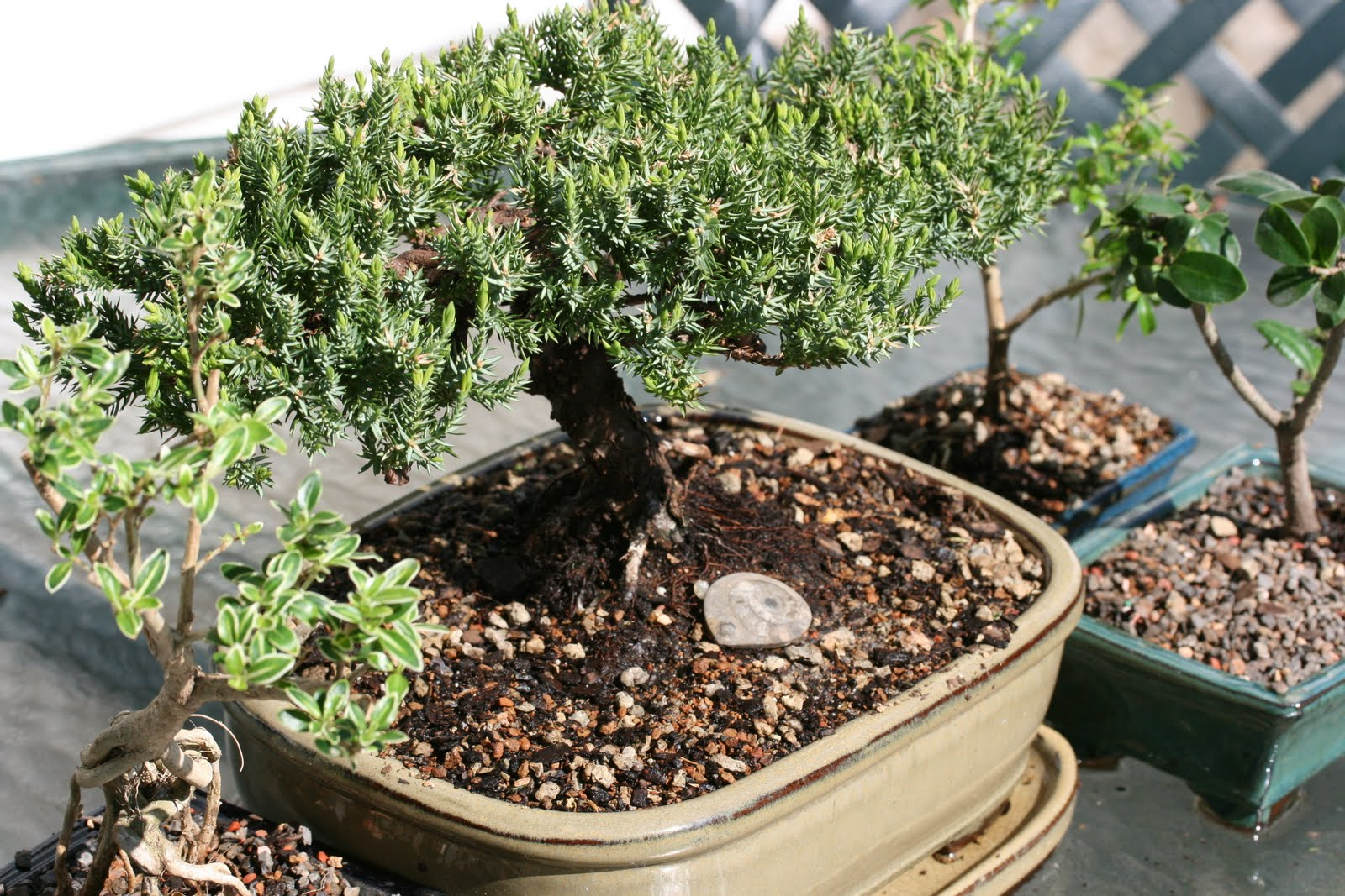 Lessons Of The Bonsai On The Path