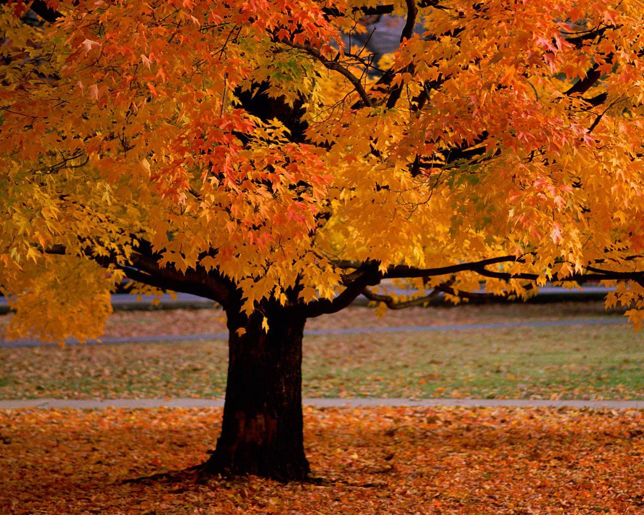 http://4.bp.blogspot.com/_X5vUbe9gTfY/TO3jaI13y-I/AAAAAAAAGUI/JsY_Iq2hh40/s1600/tree.jpg