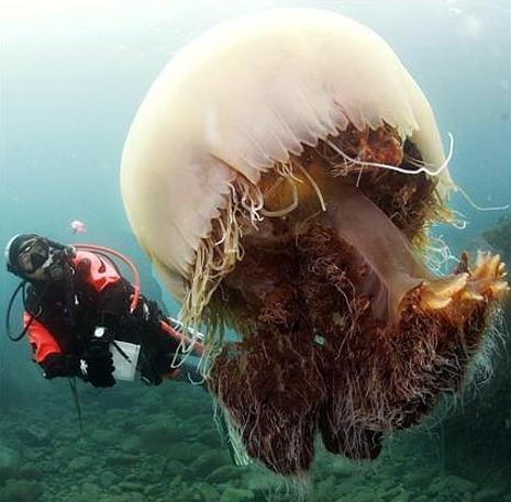 [medusa.jpg]