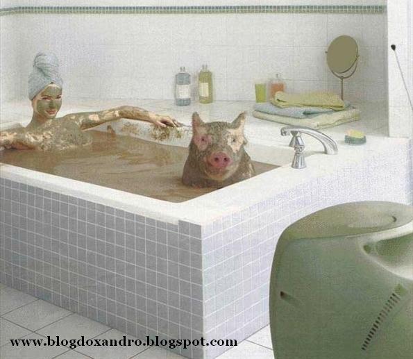 [banho-de-beleza.jpg]