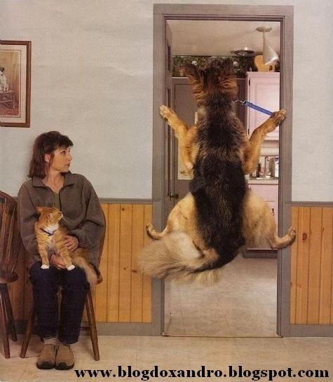 [medo-do-veterinario.jpg]