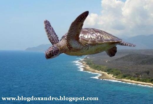 [tartaruga-voadora.jpg]
