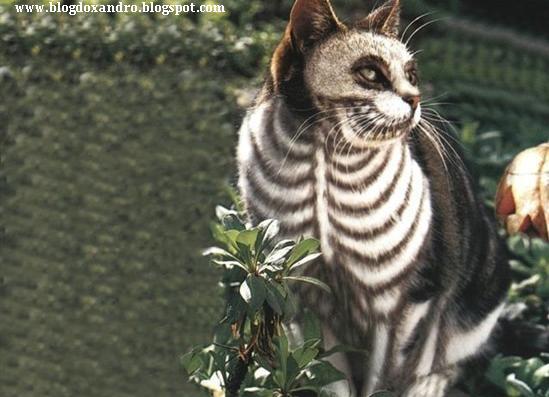[gato-raio-x.jpg]